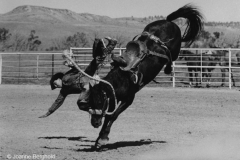 Falling Rider