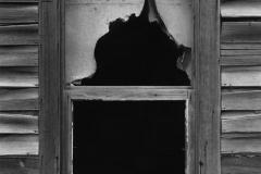 Window and Shade