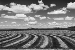 Barley Rows